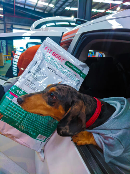 Dog leaning out a car window, sniffing at packet of dog food